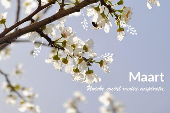 Unieke social media inspiratie: Maart 2019 | Succesvol-Bloggen.nl | socialmedia | onlinecommunicatie